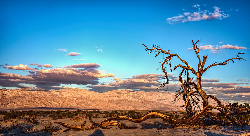 Mesquite Sand Dunes, late afternoon
