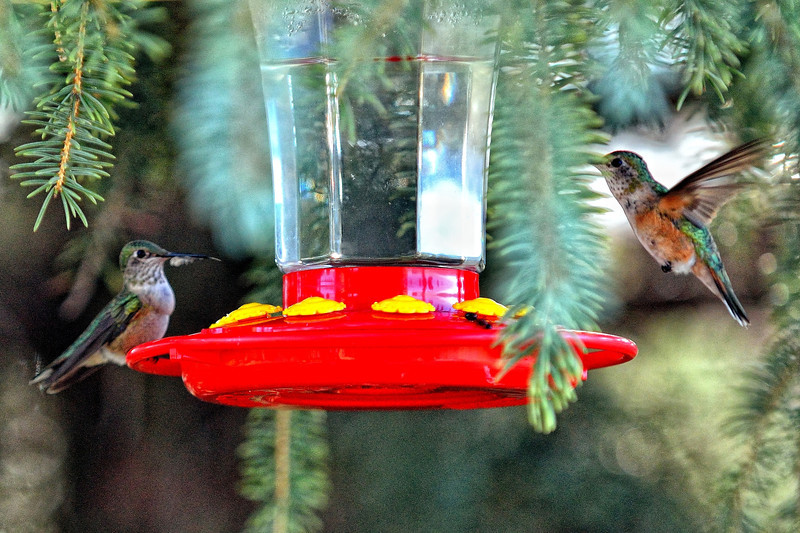 Morning coffee with the hummingbirds