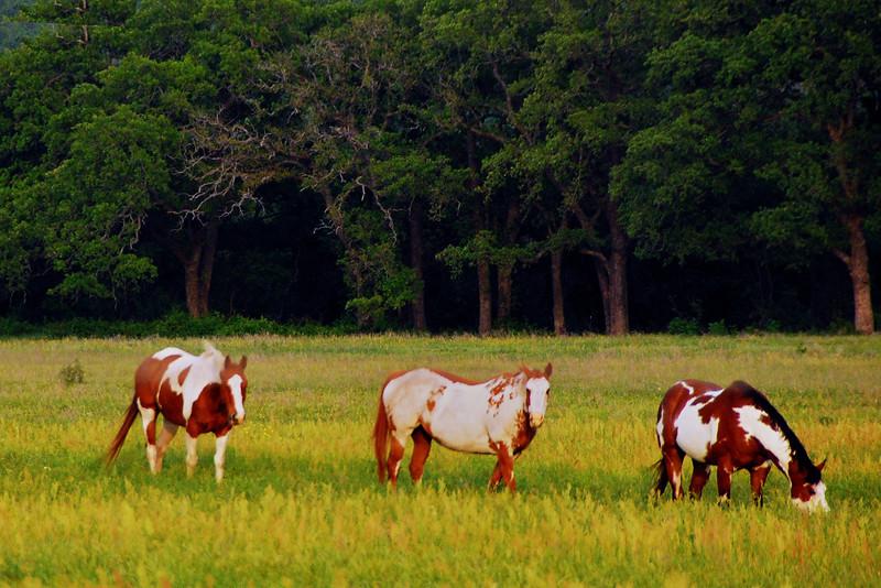 Near Stephenville, TX