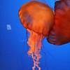 Family/2005-6-1 Ripleys Aquarium