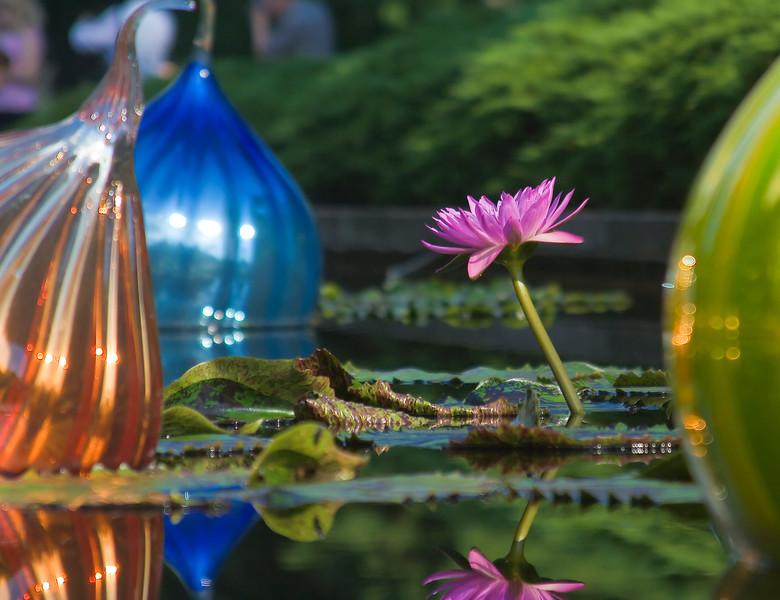 Events/shaw's garden