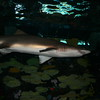 Vacation/Smoky Mountains - Ripleys Aquarium