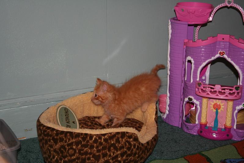 Pets/Spot Arrives!