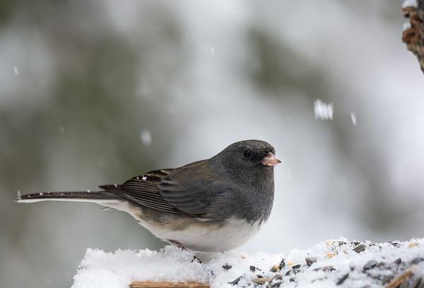 Snag Bird Shots Feb 12th