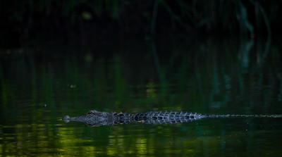Gator Bay