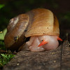 Snail in forest