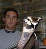 Monocled Cobra, Naja kaouthia