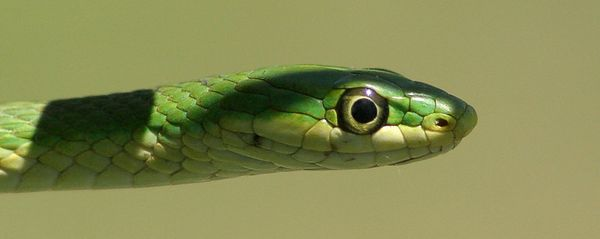 "Taken with my Cheap Sigma 70-300DL Lens ""Green Grass Snake"" Aaw ain't I cute? Rocky won't hurt me."