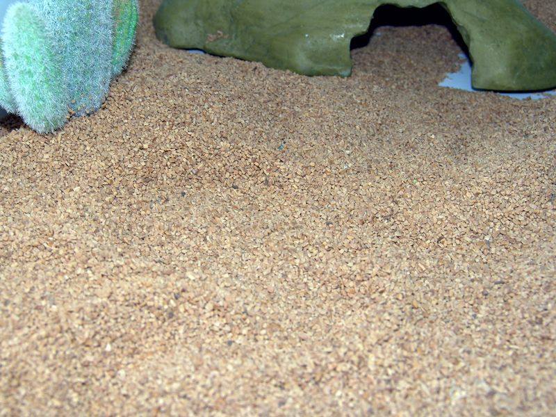 Yes, there is a Sand Viper (Cerastes vipera) here somewhere.  Try and find it!
