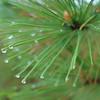 i feel pine