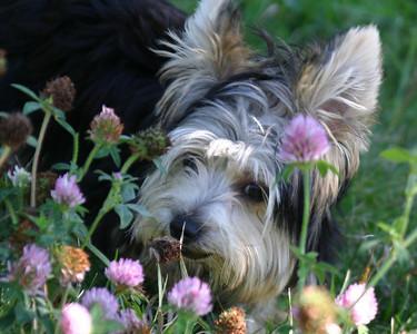Flower Child!!!!