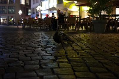 Tauben auf dem Bonner Marktplatz