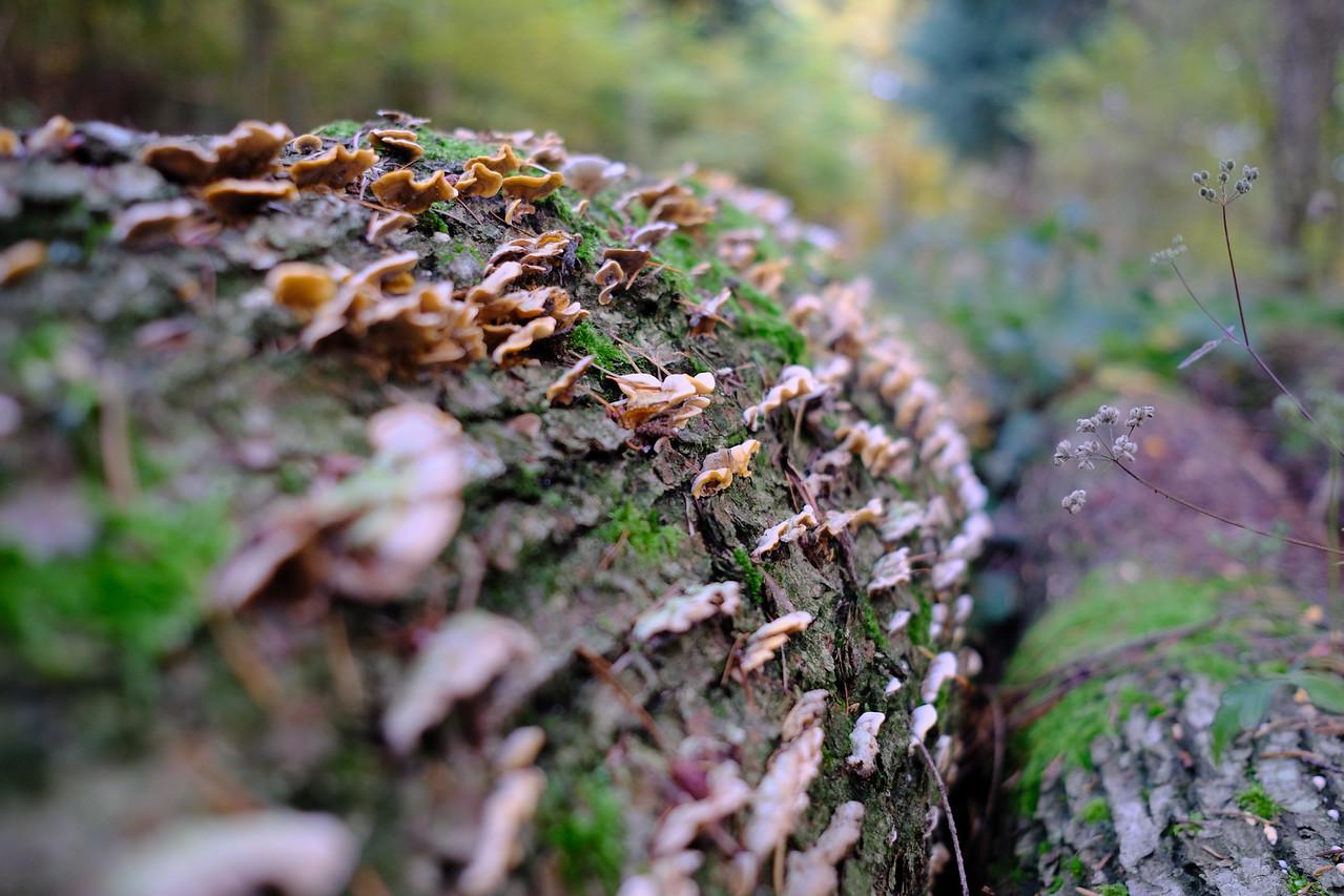 Mushrooms on a log