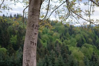 420 tree