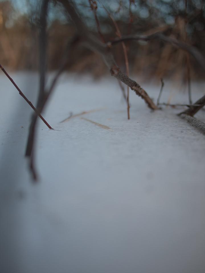 ice, shrubs III