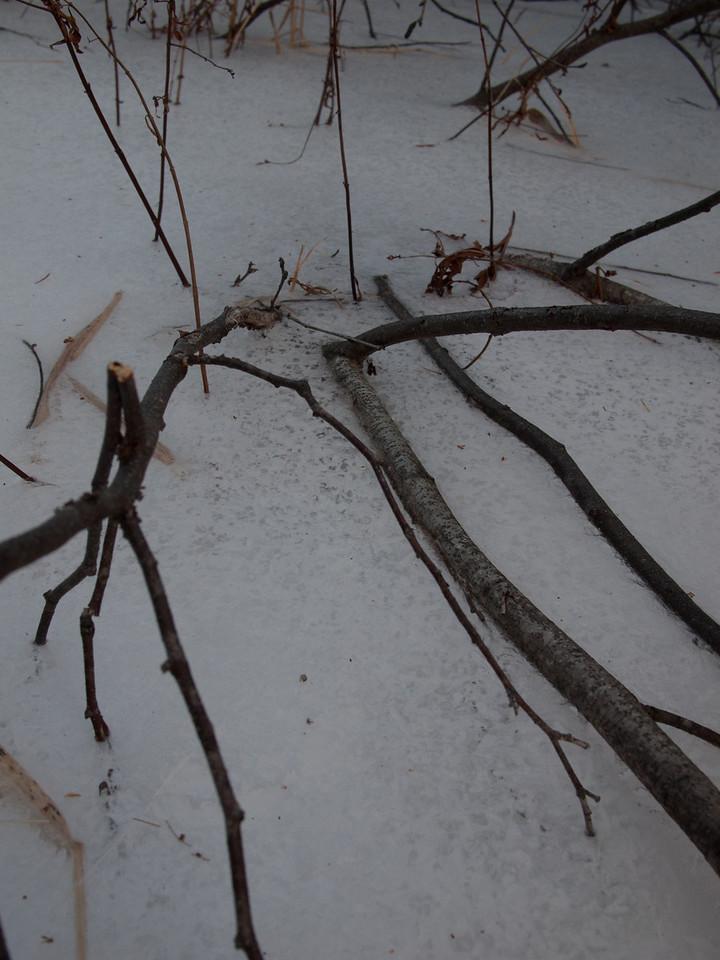 ice, shrubs I