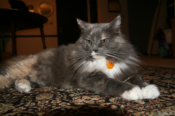 Photo of Cleo with the on-camera flash. Unaltered.