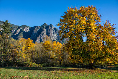 Pasture Large Maple Fall Color Mt Si