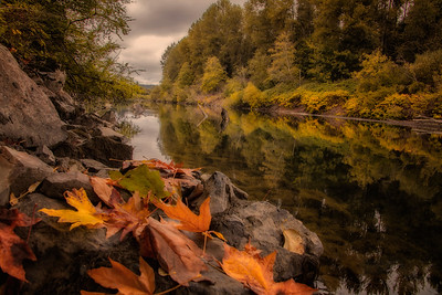 Golden Fall Leaves Snoqualmie River Bank Reflection