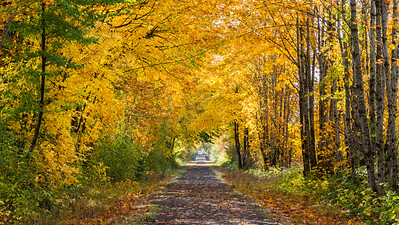 Fall on the Trail