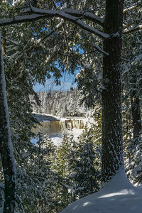 tahquamenon falls through the trees