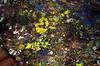 33 Lichens