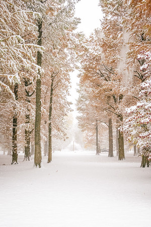 A Snowy Path in Tower Grove Park
