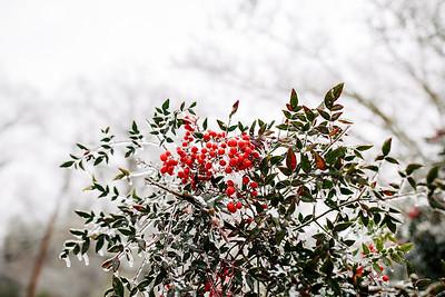 snow day-0020