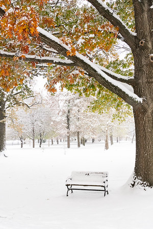 A Snowy Seat in Benton Park