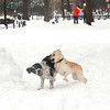 Dogs lovin to play in the snow!