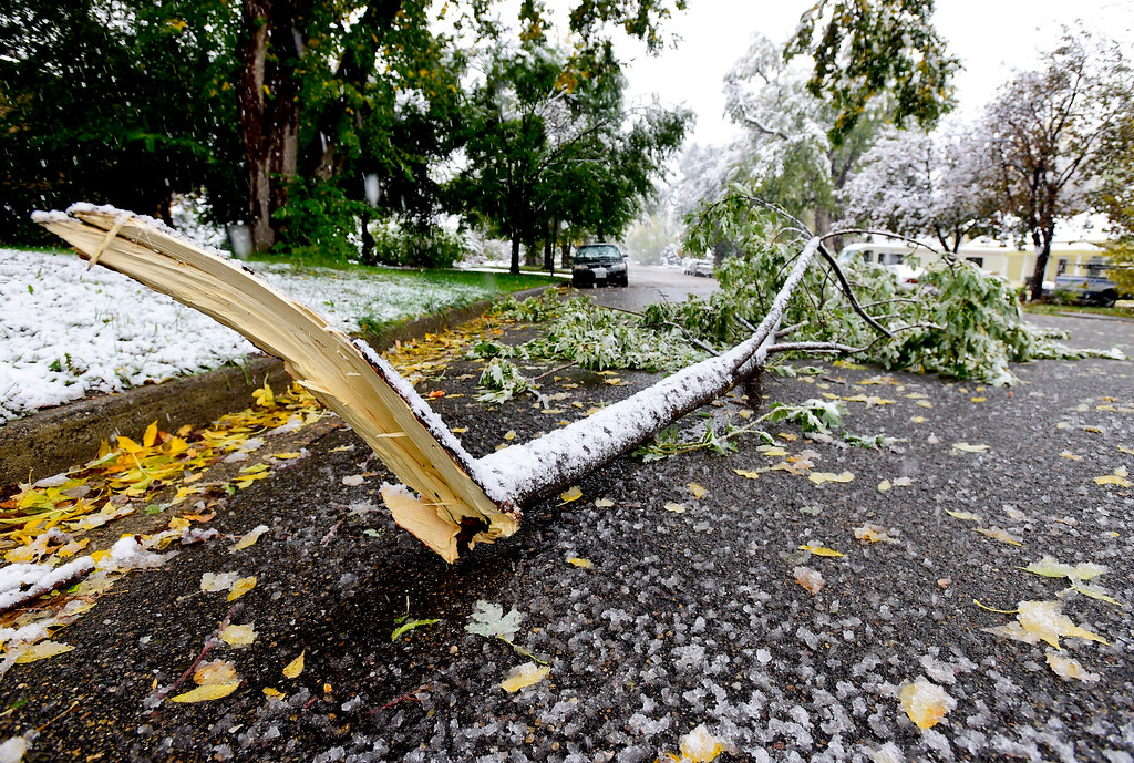 . A broken tree limb lies on the 500 Block of Baker Street in Longmont Colorado on Oct. 9, 2017.  (Photo by Matthew Jonas/Times-Call)