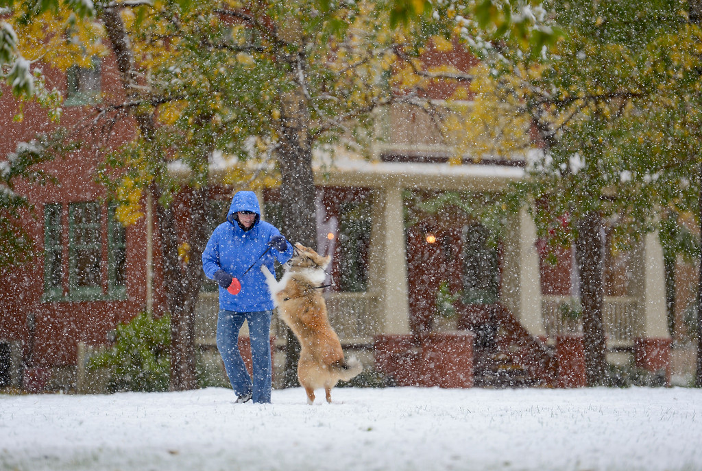 . Shelley Dahme, a pet sitter and dog walker for The Contented Pet, plays in the snow with Lily, a 9 month old Collie, at a park in the Prospect neighborhood in Longmont Colorado on Oct. 9, 2017.  (Photo by Matthew Jonas/Times-Call)
