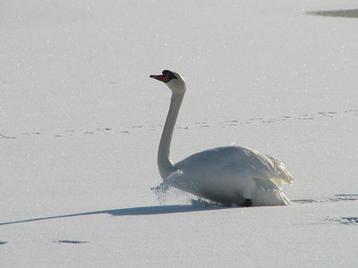 Snow* & Ice  La Rochelle