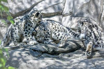 Akron Zoo June 3129