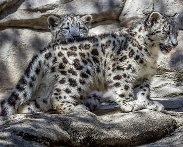 Akron Zoo June 3255