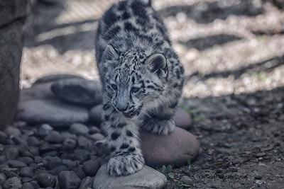 Akron Zoo 2016 0173
