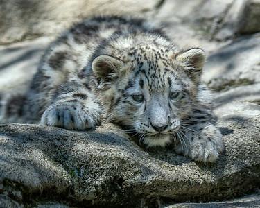 Akron Zoo June 3298 8 x 10