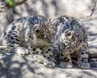 Akron Zoo June 3111 8 x 10