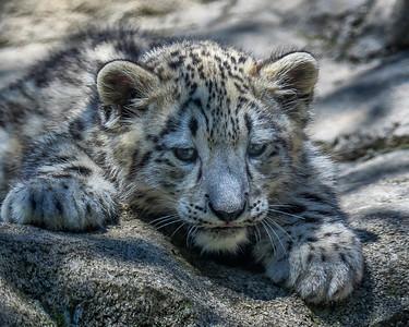 Akron Zoo June 3317 8 x 10
