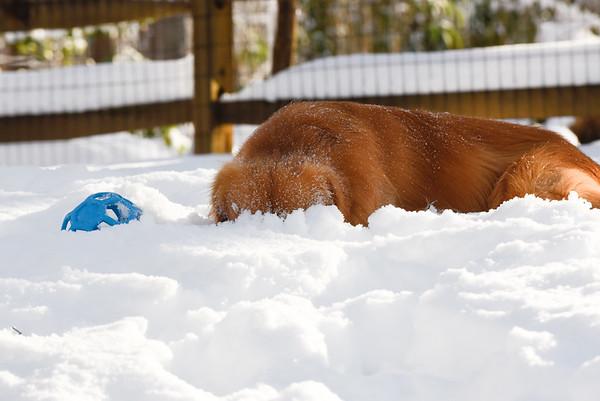 Kixx snow snuffling