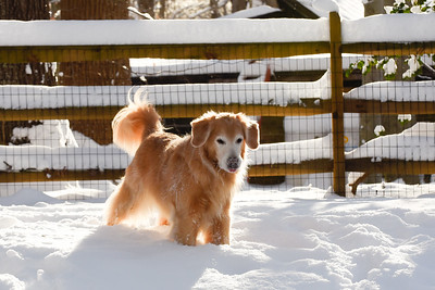Sunlit and snow-snuffling Robey