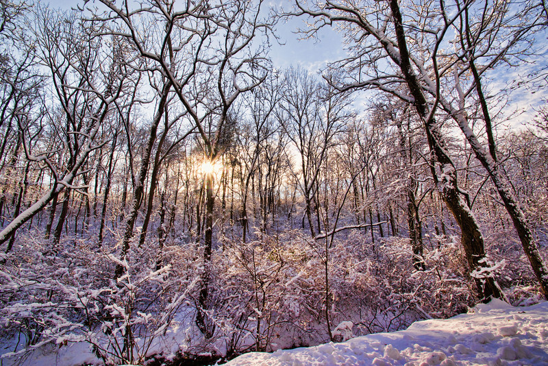 Snowy morning in the woods.