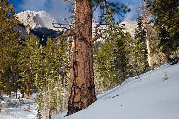 The day after the storm , MT Charleston, NV