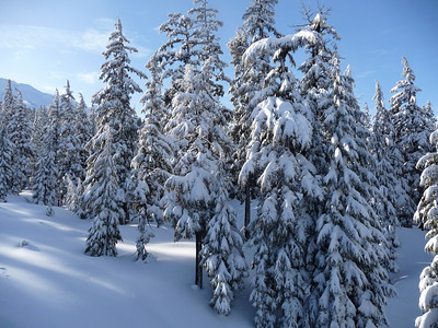 Lot's of fresh snow. Weather cleared up early afternoon and presented a beautiful day!