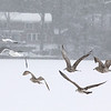 Some seagulls try to fly through the snow storm over Lake Whalom on Tuesday February 7, 2017. SENTIENL & ENTERPRISE/JOHN LOVE