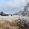 Cattle graze in an icy field following a major ice storm in Norman, OK, on December 22, 2013.