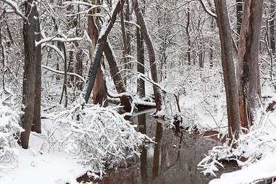A winter wonderland on January 30, 2010, at a small creek near Norman, OK.