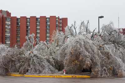 Following a crippling ice storm, trees lay in ruins outside Walker Tower at the University of Oklahoma on December 10, 2007.