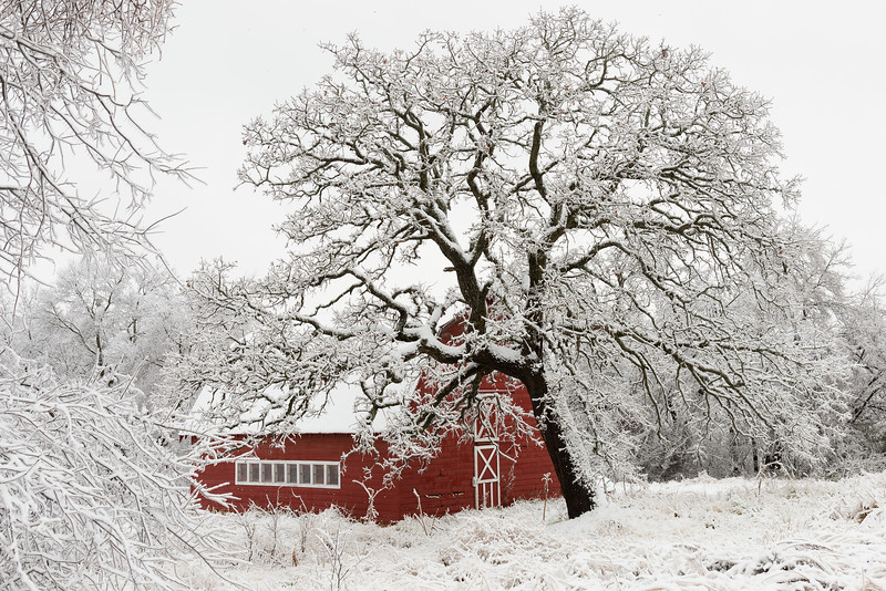 Heavy, wet snow plasters a classic barn in Norman, OK, on New Year's Day 2021.