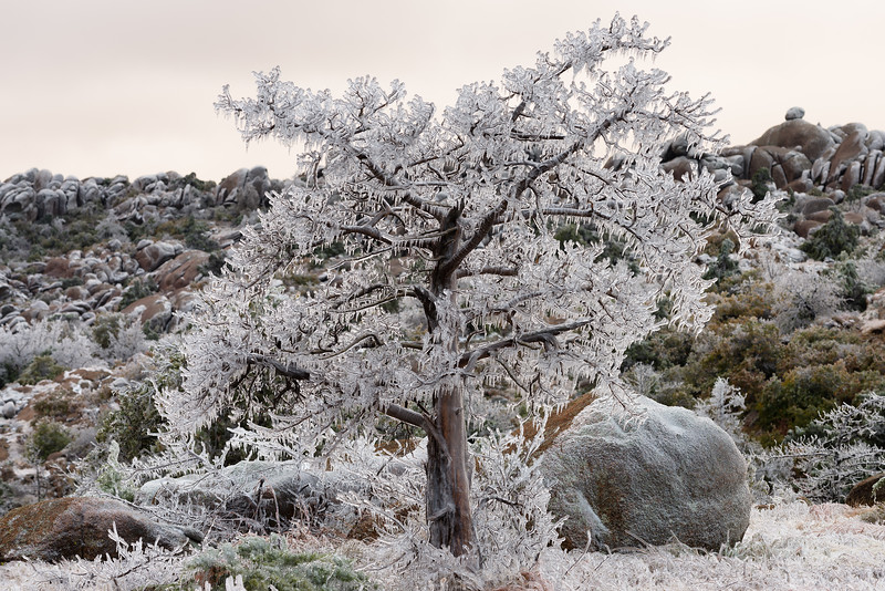 A major winter storm plasters vegetation with ice in the Wichita Mountains on October 27, 2020. This historic ice early-season ice storm occurred well before trees lost their leaves, resulting in increased damage.